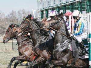 Die besten Wett-Tipps für Pferderennen Sportwetten